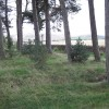 Woodland surrounding Harlaw Reservoir