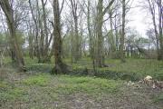 Crow's Nest Wood