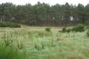 Tullochgribban Plantation