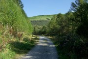 Garw Forestry Walk