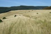 Waun Tynewydd, top of Garw Forestry Walk