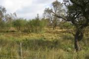 Leash Fen - Sparse Woodland