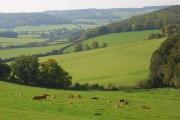 Pastures, Fingest