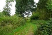 Woodland near Latimer