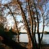 Poplars in the Morning Sun