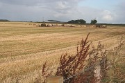 Feeding Cattle near Mains of Loanhead