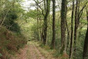 Bovey Tracey: in Yarner Wood
