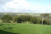 Upper Hathershelf Wood, Mytholmroyd