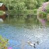 Parkland pond