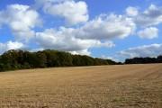 Stubble and woodland, near Quarley