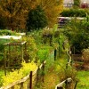 Allotment path