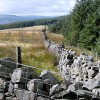 Edge of Gethin forest