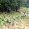Scrambling in Gethin forest