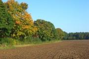 Farmland, Shiplake