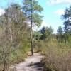 Heathland Path, Frensham