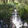 Woodland Stream, Frensham
