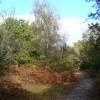 Pondside Path