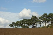 Soil, trees and clouds