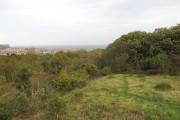 Woodland, Bryn Pydew