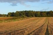 Farmland, Ufton Nervet
