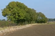 Farmland and trees near Kilvington