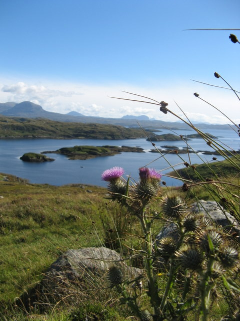 Scottish thistle over Badcall Bay