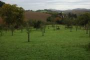 Farmland at Eastnor