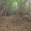 Reydon Wood - Autumn