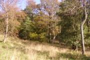 Olchon Barn Wood