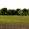 Newly Planted Farmland near East Hendred
