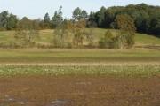 Farmland near Lennoxlove