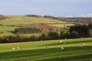 Pastures near Winchcombe