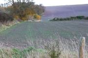 Farmland near Sparsholt, Oxfordshire