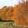 Fox Brake, east of Sparsholt, Oxfordshire