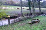 River ecology management