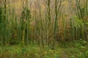 Regenerating woodland
