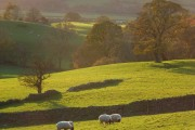 Pastures, Lorton