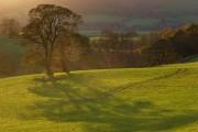 Trees in pastures above Lorton