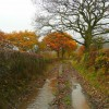 Lane from Barnes Farm 3