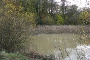 View of Nitticarhill Wood and small pond