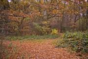Woodland path, Cheyne Walk Open Space, London N21