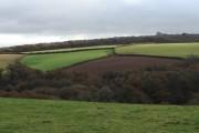 Woodland amidst the fields, from Lupridge