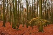 Oveys Wood