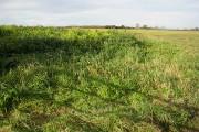 Farmland near Gwynne's Hill