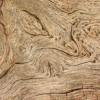 'Contour map' on old tree stump