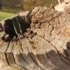 Old tree stump in Moorats Park