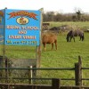 Local Riding Stables