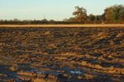 Farmland, Sonning Common