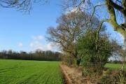 Oak lined hedgerows