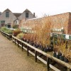 Waterperry garden centre